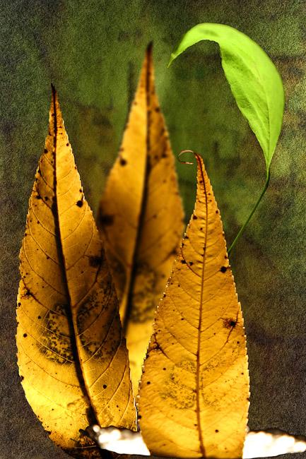 foglie_cadute